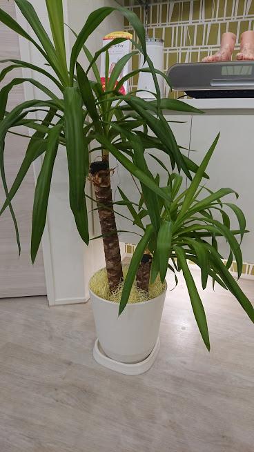 この画像には alt 属性が指定されておらず、ファイル名は 観葉植物.jpg です